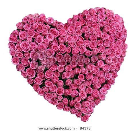 La rose nous a tant souri